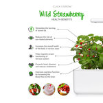 Click & Grow Refill Wilde Aardbei 3-pack